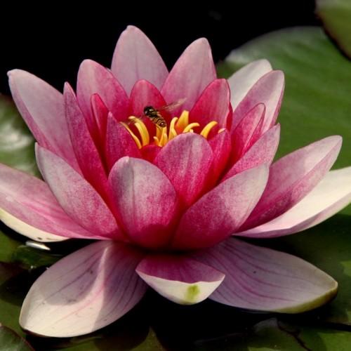 Working towards - the lotus pose