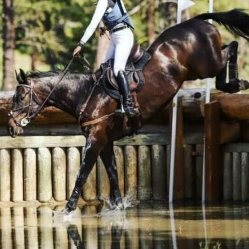Equestrian Centric